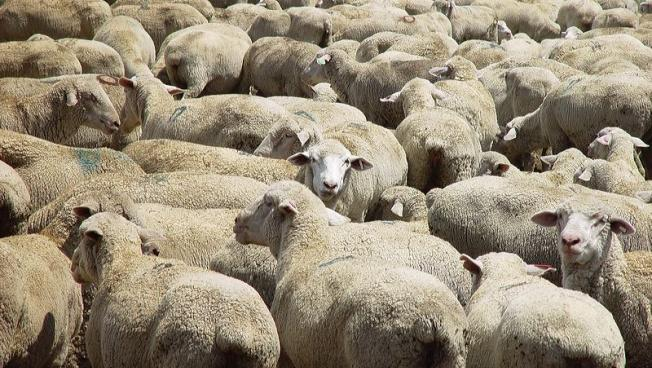 It's time for the media to stop acting like sheep.