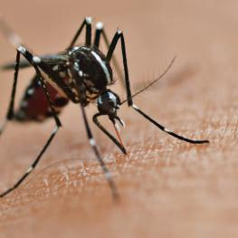 Here's What You Need To Know About The Zika Virus