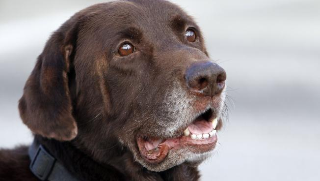 Can A Narcotics Dog Smell Marijuana